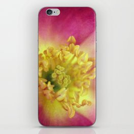 The Last Rose of Summer iPhone Skin