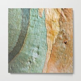 Eucalyptus Tree Bark Wood Abstract Colorful Texture Macro Metal Print