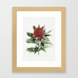 Waratah Flower Framed Art Print