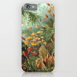 Ernst-haeckel-Kunstformen-der-Natur-viintage iPhone Case