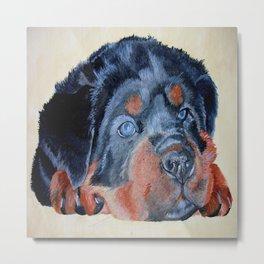 Rottweiler Puppy Portrait Metal Print