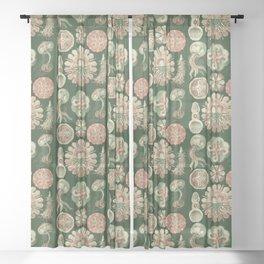 Ernst Haeckel Discomedusae Jellyfish Sheer Curtain