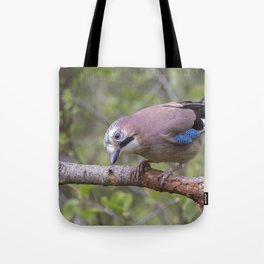 Wild colourful Jay bird Tote Bag