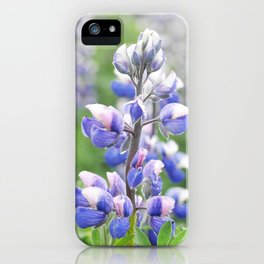 Lupine flower in Iceland iPhone Case