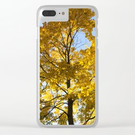 yellowed maple trees in autumn Clear iPhone Case