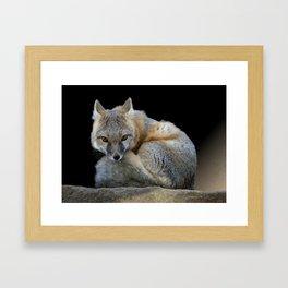 Eyes of the Fox Framed Art Print