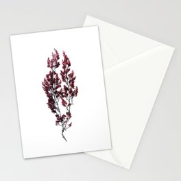 British Sea Weed Stationery Cards
