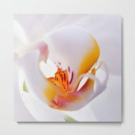 Orhid white macro 244 Metal Print