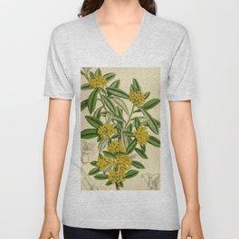 Daphne giraldii, Thymelaeaceae Unisex V-Neck
