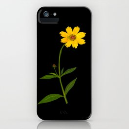 Mary Delany Botanical Vintage Flower Floral Collage Coreopsis Lanceolata iPhone Case