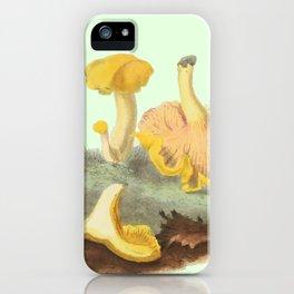 Cantharellus Cibarius iPhone Case