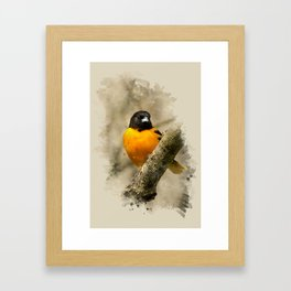 Baltimore Oriole Watercolor Painting Framed Art Print