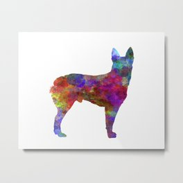 Australian Stumpy Tail Cattle Dog in watercolor Metal Print