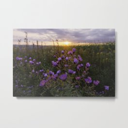 Wildflowers at Sunset Metal Print