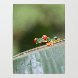 Red eye Frog on leaf Costa Rica Photography Poster