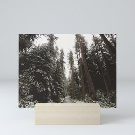Redwood Forest Adventure II - Nature Photography Mini Art Print