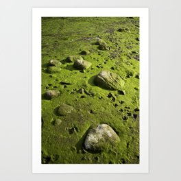 A Dry Pond Reveals Much Beneath Art Print