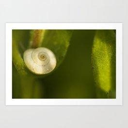 Sunny snail #2 Art Print