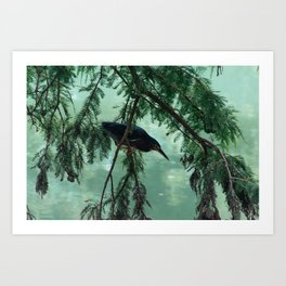 Green Heron Art Print