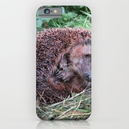 Erinaceidae,small hedgehog, wild living, sleeping in the grass iPhone Case
