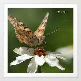 Butterfly macro photography Art Print