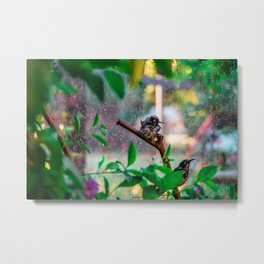 Silly New Holland Honeyeater Sprinkler Bonanza Metal Print