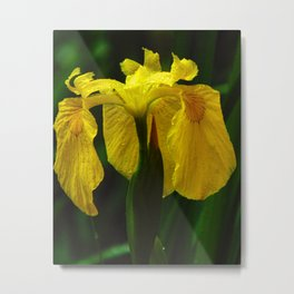 I know how the Iris Felt Metal Print