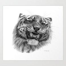 Tiger roar  G082 Art Print