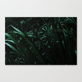 Grass blades basking in the sun - Abstract Canvas Print