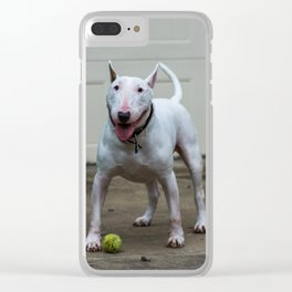 Englis Bull Terrier Clear iPhone Case