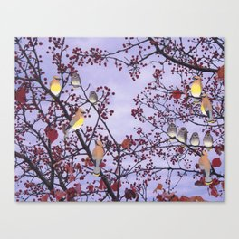 cedar waxwings and berries Canvas Print