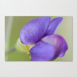 Taking Flight - Purple Lupin, New Zealand Canvas Print