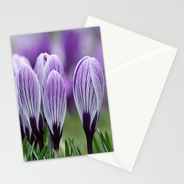Purple Crocus Stationery Cards
