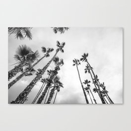 Desert Palms Twilight Canvas Print
