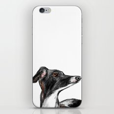 Italian Greyhound iPhone & iPod Skin