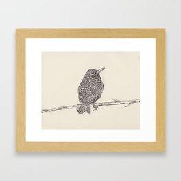 European Starling Framed Art Print