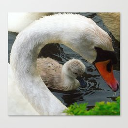 Swan Mothers Day Canvas Print