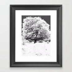 Snow Tree Framed Art Print