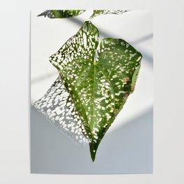 Leaf Light II Poster