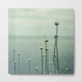 Snail and Allium Metal Print