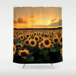 Sunflower Field Shower Curtain Pictures
