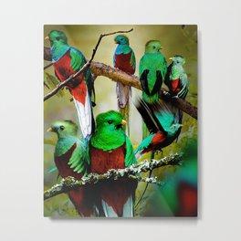 Quetzals Metal Print