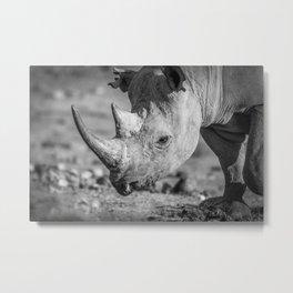 B&W Black Rhino Metal Print