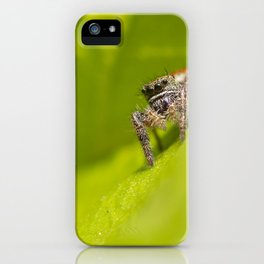A Jumping Spider (Salticidae) hunts in the foliage of the garden iPhone Case