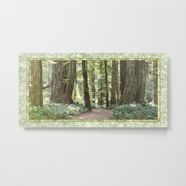 SUNNY REDWOOD TRAIL IN THE STOUT GROVE Metal Print