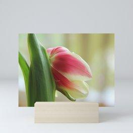 Tired Tulip II Mini Art Print