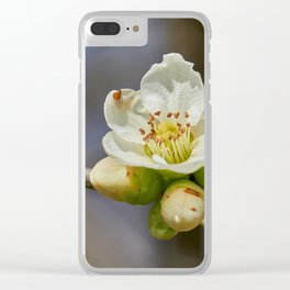 blooming tree in spring Clear iPhone Case