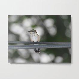 Power line hummingbird 5 Metal Print