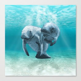 Two Manatees Swimming Canvas Print