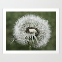 Dandelion Photograph | Nature | Plant | Botanical Art Print